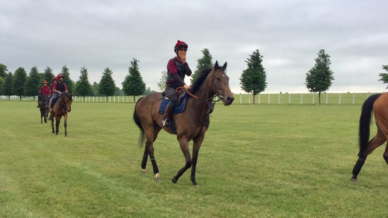 Poetry in motion - Michael Bell's Kingman filly