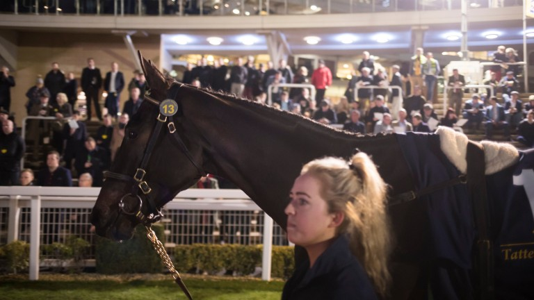 Feel My Pulse - a son of the late Stowaway - on his way to selling for £330,000 at Cheltenham
