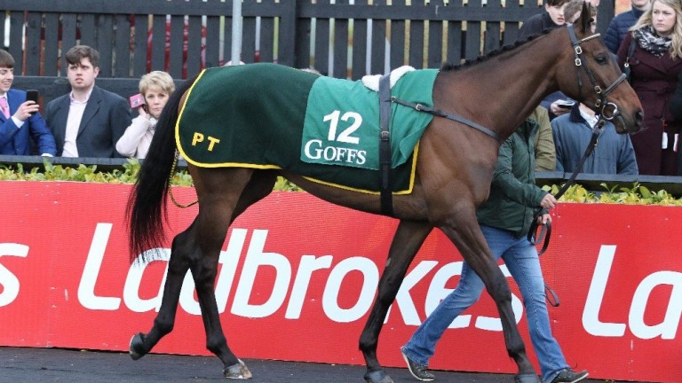 Lecale's Article: son of Malinas found himself in demand at the Goffs Punchestown Sale