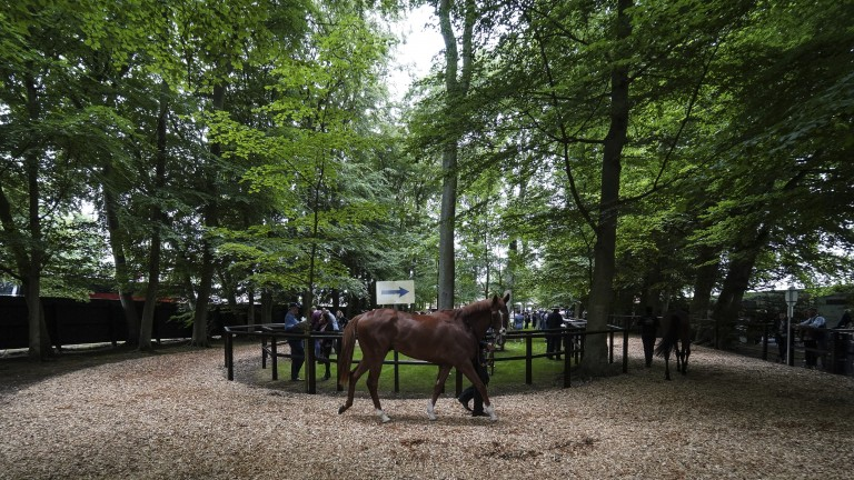 Hidden away: the peaceful feel of the pre-parade on the July course is back as runners prepare to be saddled ahead of the first race