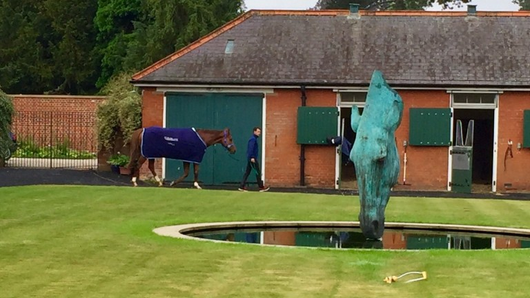 "Redkirk Warrior is staying at Abington Place where the centrepiece is a statue called ""Still Water"""