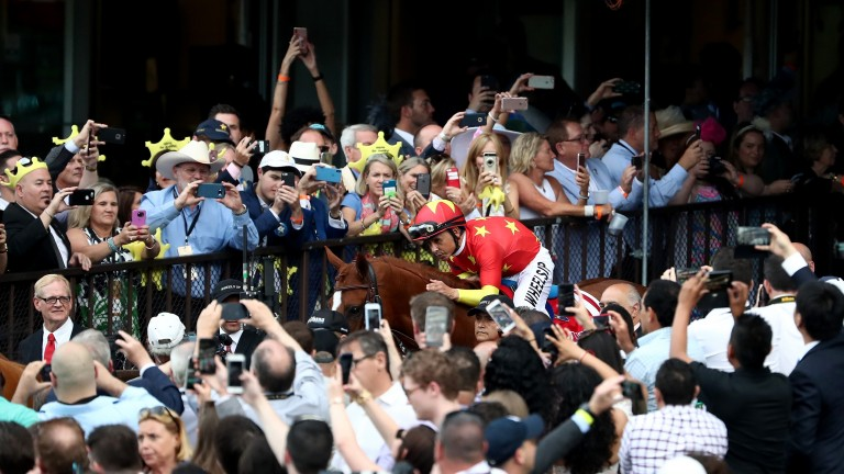 Justify, the 13th Triple Crown winner, makes his way through the crowd after landing the Belmont Stakes