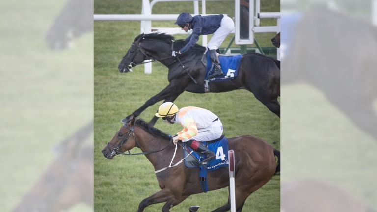 A son of Scat Daddy, Dali (far side) goes down narrowly at the Curragh