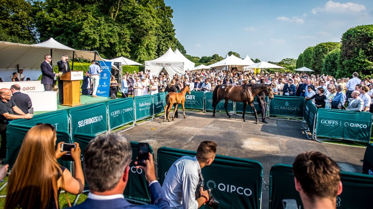 Goffs: the London Sale takes place on the eve of Royal Ascot