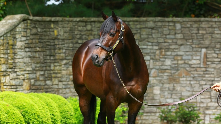 Scat Daddy: the late, great sire poses for the camera at Ashford Stud in Kentucky