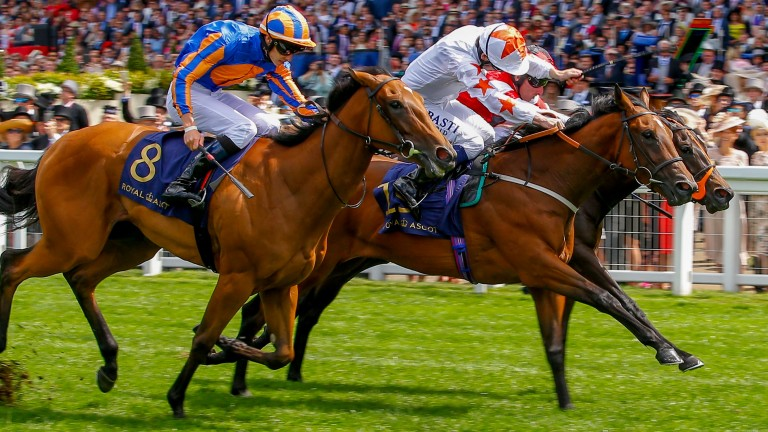 Signora Cabello (white): best filly John Quinn has ever trained