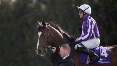 President elect? Delano Roosevelt is one of three runners for Aidan O'Brien in Friday's King Edward VII Stakes at Ascot