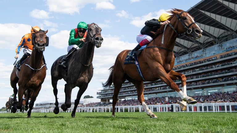 Vazirabad (centre, green silks) will not be sent to Goodwood for a rematch with his Ascot Gold Cup conqueror Stradivarius (yellow cap) at the end of the month