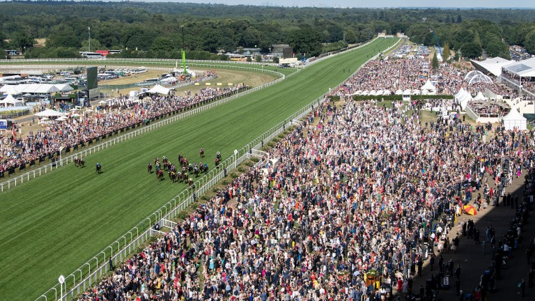 Ascot: stage the Shergar Cup on Saturday