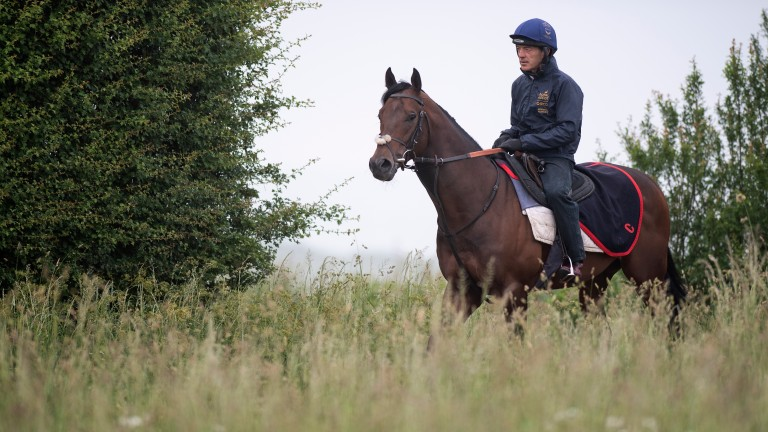 Harry Angel (Kevin Harris) leads 1st lot down to the gallops at Clive Cox's Beechdown Farm Stables Lambourn 12.6.18 Pic: Edward Whitaker