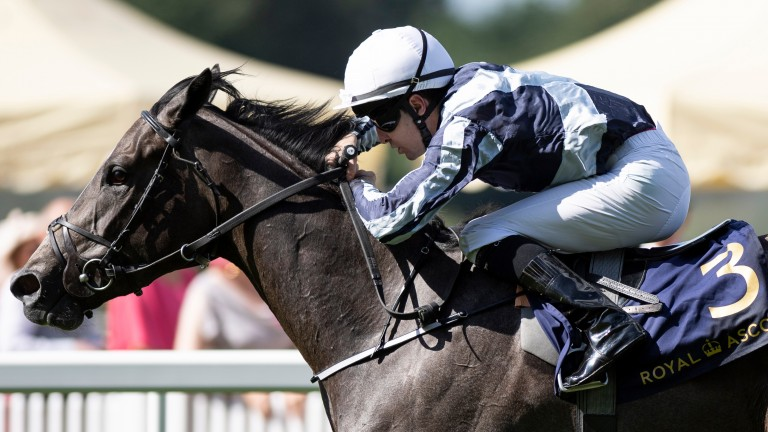 Alpha Centauri: season's star performer sets high standard at Deauville