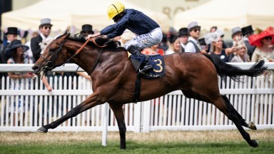 Crystal clear: Crystal Ocean proves too good for the rest and lands an 11th Hardwicke Stakes for trainer Sir Michael Stoute