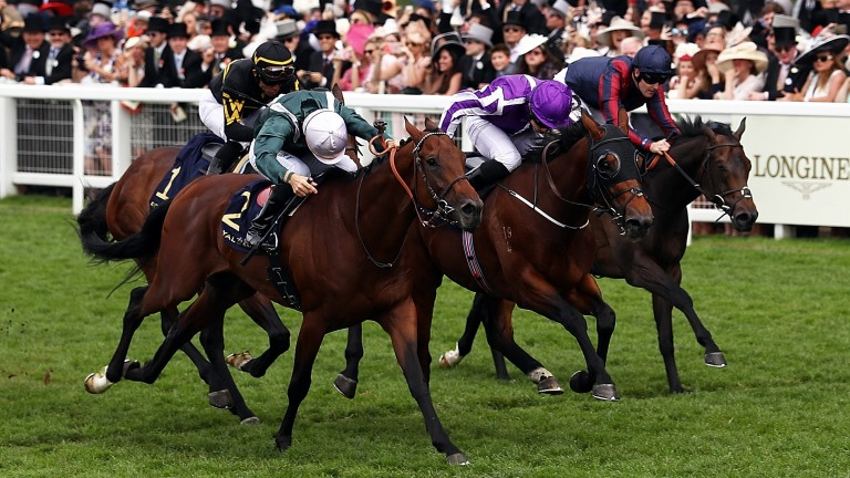 One stride too late: City Light and Christophe Soumillon (head down, near side) head the field just after the line at Ascot, with The Tin Man (navy blue silks, far side) closing fast.