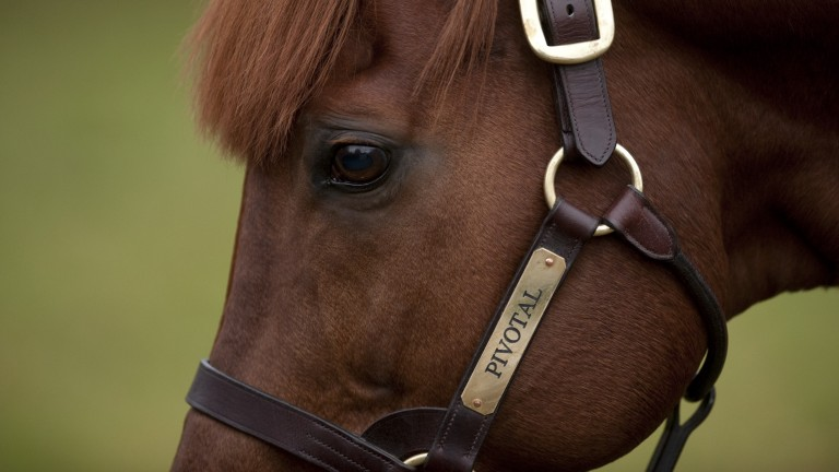 Pivotal: now broodmare sire of 12 Group/Grade 1 winners