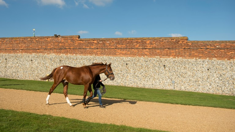 A total of 918 lots are set to go under the hammer at the Tattersalls July Sale