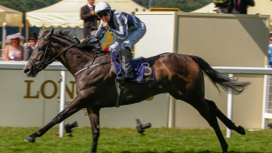 Alpha Centauri: is a likely runner at Newmarket