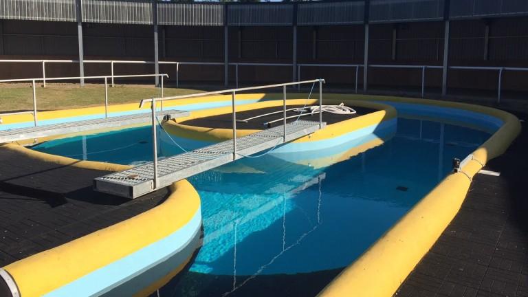David Lanigan has the luxury of an equine pool