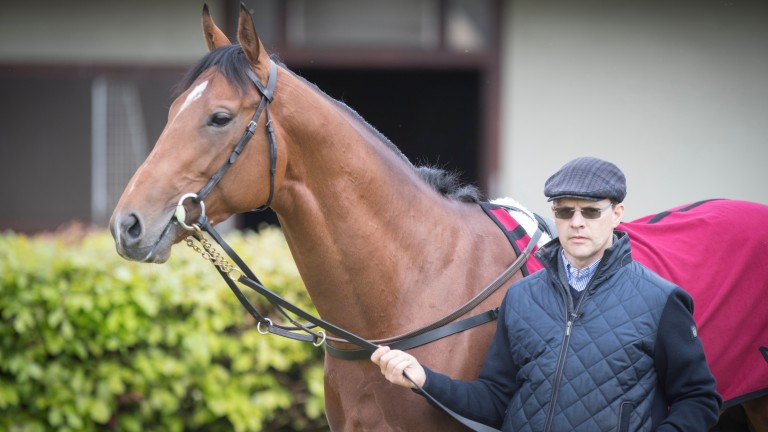 """Aidan O'Brien with Saxon Warrior: """"He was a little bit unsure of himself at Epsom"""""""