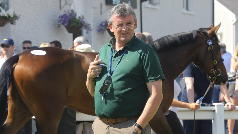 Eddie O'Leary on the lookout for stars at Tattersalls Ireland