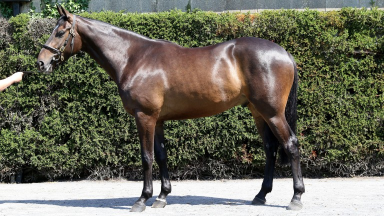 The Presenting gelding bought by Jimmy Murphy for €40,000 and resold to Gordon Elliott for €200,000