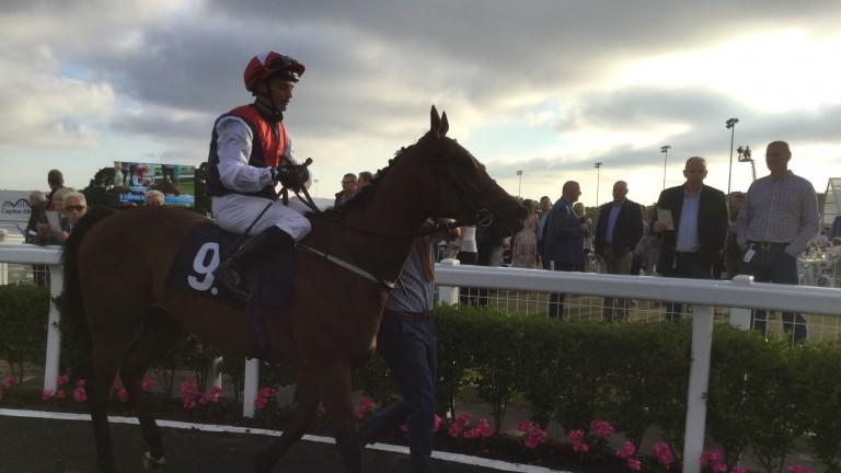 Copper Knight was an impressive winner 12 months ago