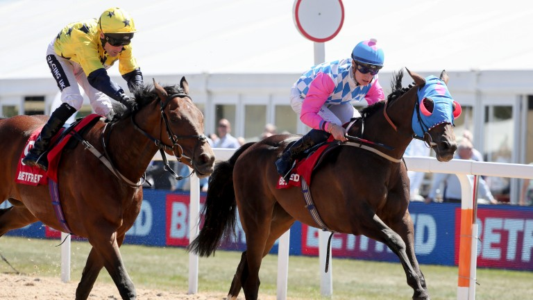 Cosmelli has two wins at Newcastle and finished a close fourth in this year's Northumberland Plate