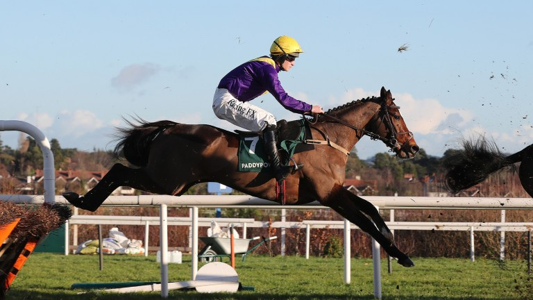 Whisky Sour: won two valuable Flat handicaps at the meeting last year and could double up again