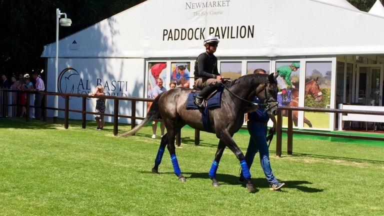 Roaring Lion - enjoyed a racecourse gallop last weekend