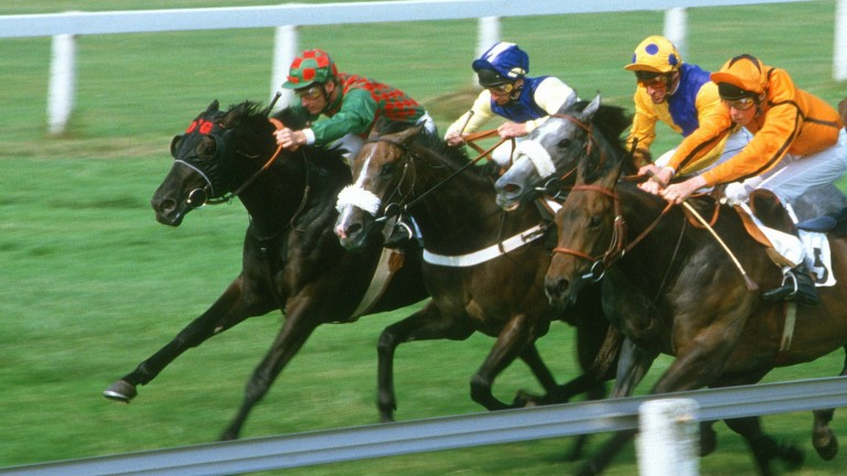 Provideo and Tony Ives (far side) take the Star Stakes at Sandown in July 1984 as part of a record-equalling sequence