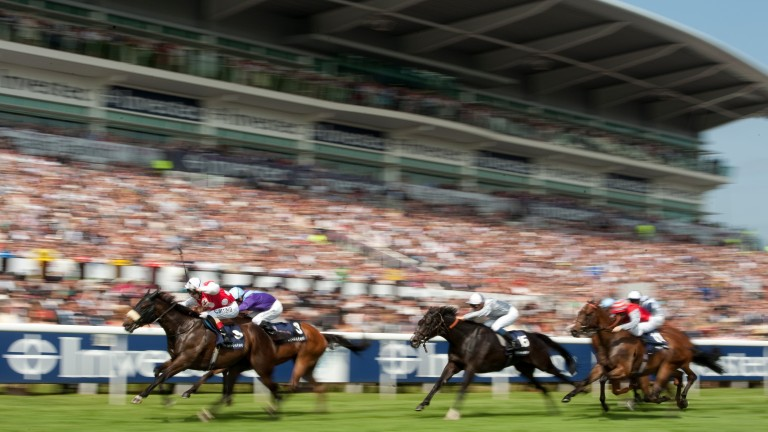 King of speed: Stone Of Folca runs away with the 2012 Epsom Dash in a world-record time