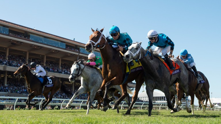 Stormy Liberal (blue cap) clocks the fastest-ever time in the BC Turf Sprint, at Del Mar last year