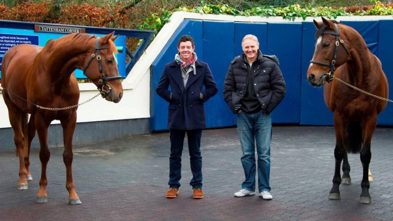 Joe Schmidt (right): pictured visiting Coolmore Stud alongside Rory McIlroy