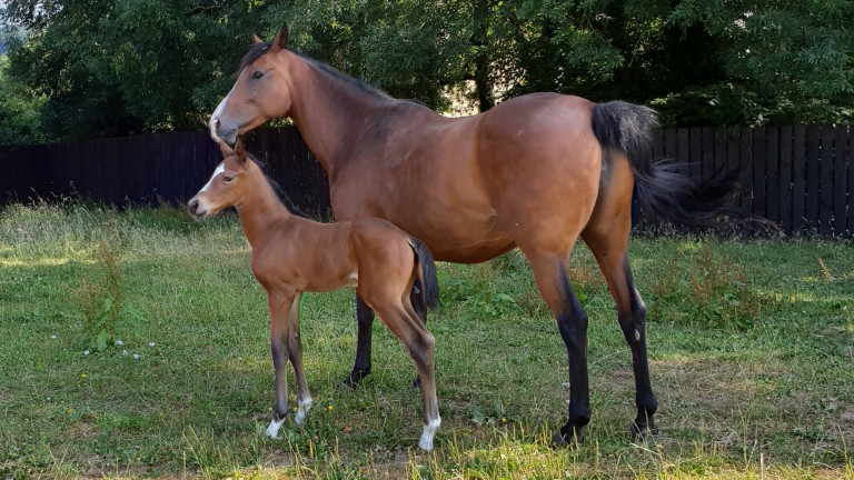 At ease: The Wicked Kipper pictured with her day-old Getaway colt