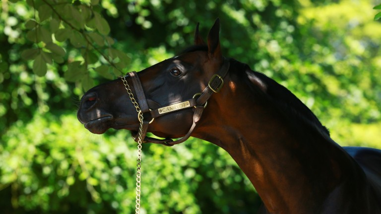 Camelot supplied his second top-level scorer on Saturday when Athena won the Belmont Oaks