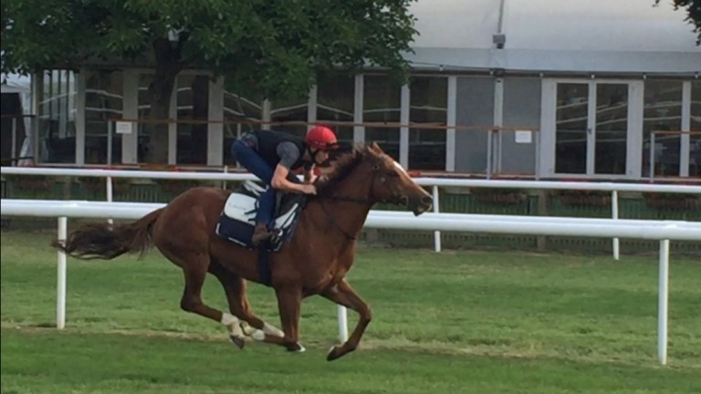 Redkirk Warrior and Regan Bayliss on the July course