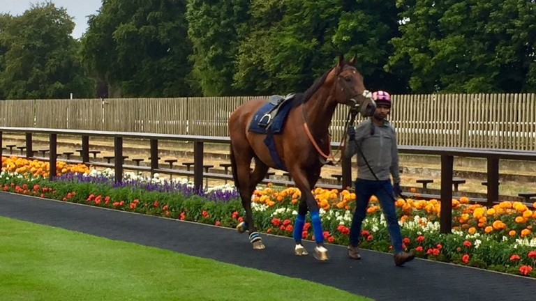 Eqtidaar takes in the sights of the July course on Tuesday morning