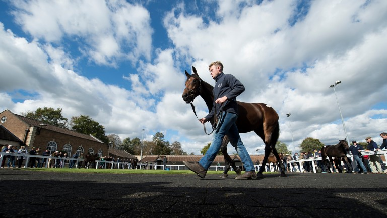 Tattersalls: no surprise to see last year's record-breaking figures smashed again