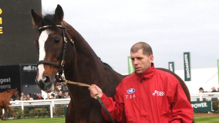 Black Sam Bellamy being shown off to breeders at Cheltenham in 2013