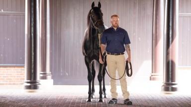 Slade Power in the Darley stallion paradeNewmarket 12.7.18 Pic: Edward Whitaker