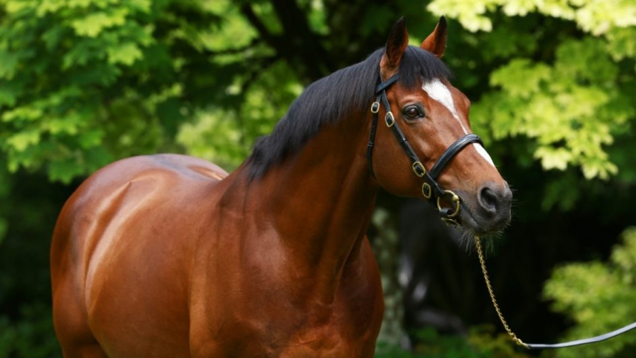 Galileo Joins His Father Sadler S Wells With 73rd