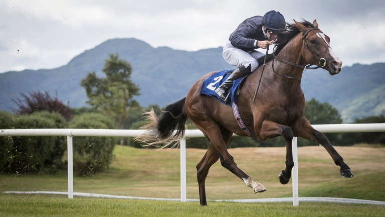 Anthony Van Dyck: shortest price of Aidan O'Brien's Dewhurst possibles