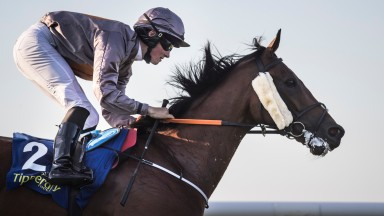 Aussie Valentine: out to contine his fine record in the Irish Lincolnshire at Naas on Sunday