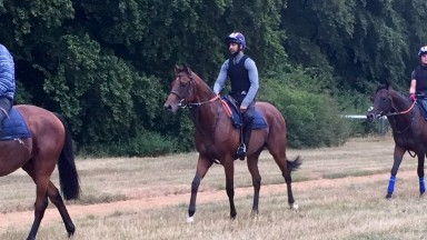 Almania : could make his debut at Haydock on Saturday night