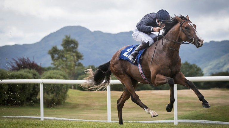 Anthony Van Dyck: National Stakes runner-up heads Ballydoyle challenge