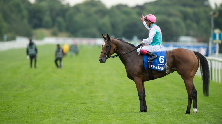Enable: her Dansili half-brother Centroid will make his debut on Thursday