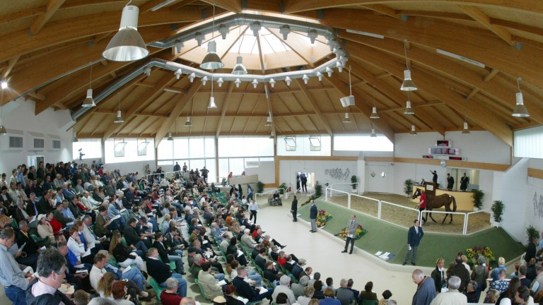 BBAG: the October Yearling Sale recorded a disappointing clearance rate