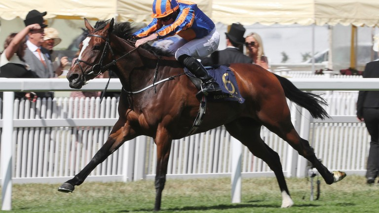 Magic Wand: was found to have a dirty nose after flopping in last week's Irish Oaks