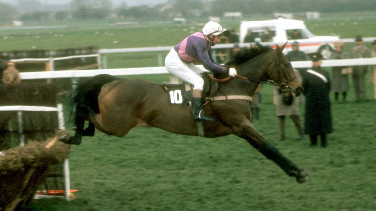 Night Nurse and Paddy Broderick in their pomp in the 1976 Champion Hurdle