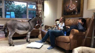 Phil Kirby with his donkey , his daughter and his dog all looking relaxed in their living room