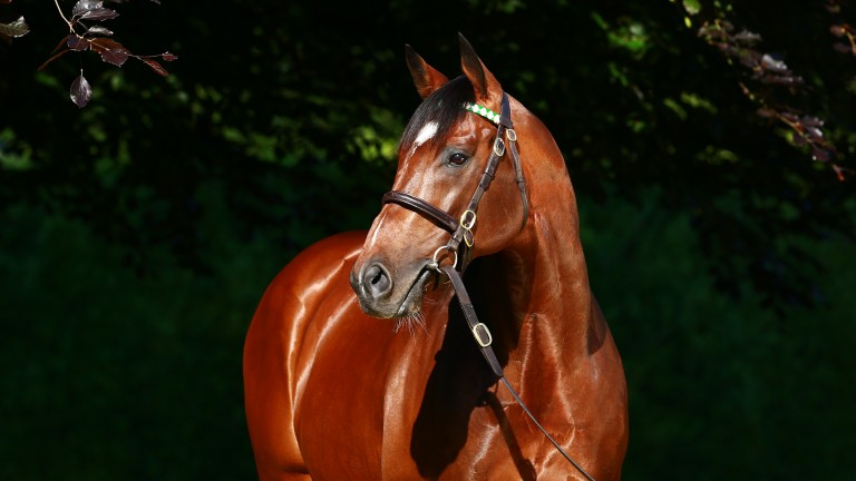 Frankel: Cunco will become the unbeaten champion's third sire son